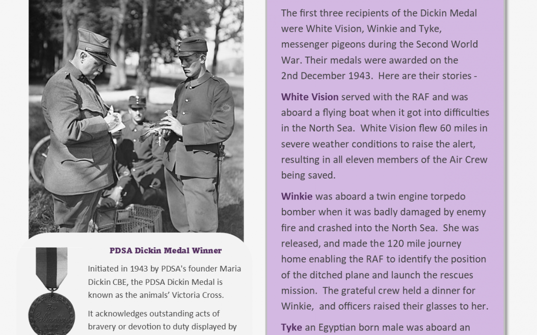 Animals Who Served – Information Sheet 1