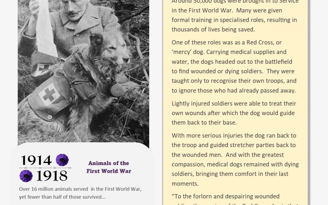 Animals Who Served – Information Sheet 2