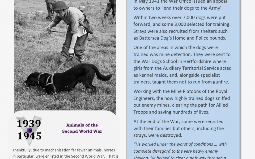 Animals Who Served – Information Sheet 3