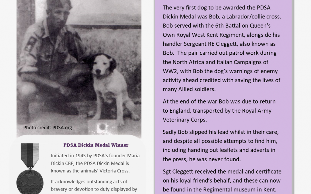 Animals Who Served – Information Sheet 5