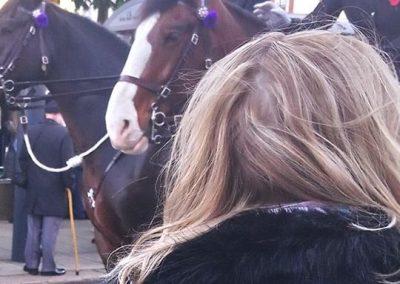 WYP Horses